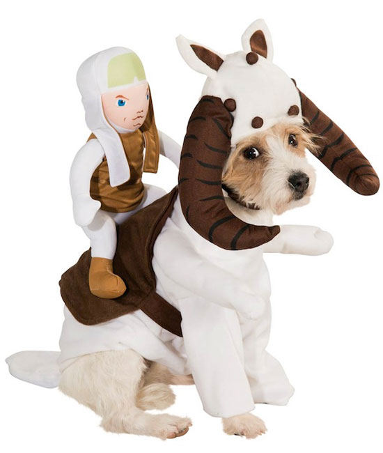 Un d guisement star wars pour votre chien jamais sans maurice - Deguisement halloween chien ...