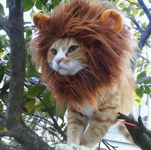 deguisements-halloween-pour-animaux-chat-lion
