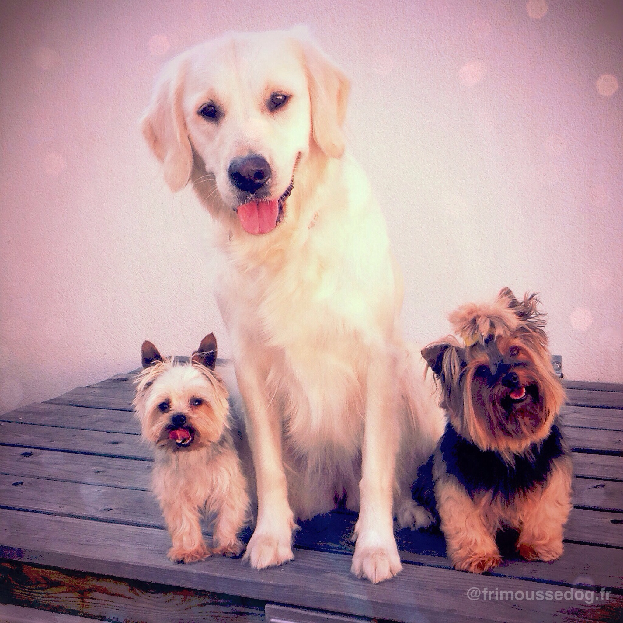 Dog Friendly Fouras