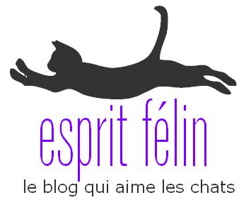 esprit-felin-blog-chat