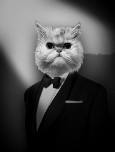 portrait-animal-2