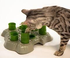 Photo-jeu-ludique-chat