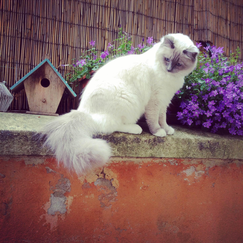 Les plantes toxiques pour les chats et les chiens jamais for Plante toxique chien