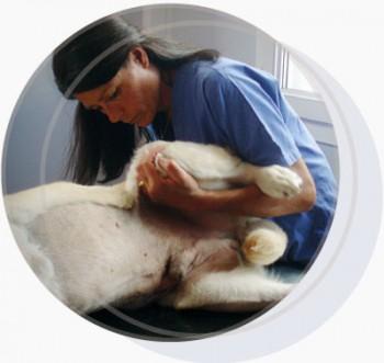 Osteopathie-veterinaire