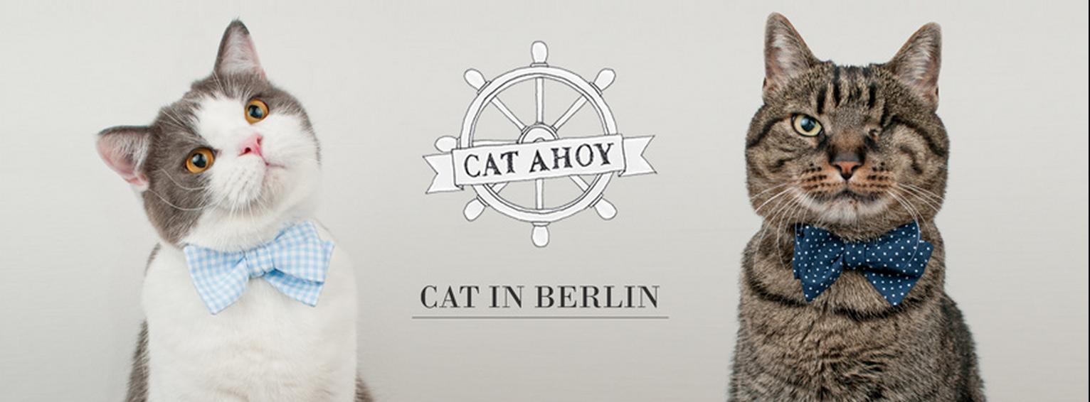cat in berlin mode chat 14