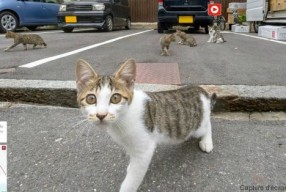 « Cat Street View », une carte interactive à hauteur de chat