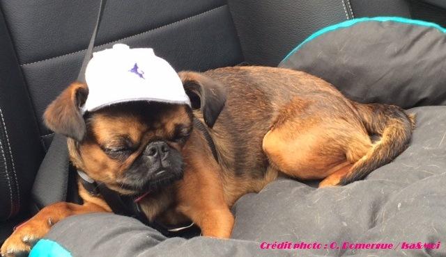 Un h tel pet friendly au portugal casa de alpajares for Hotels qui acceptent les chiens