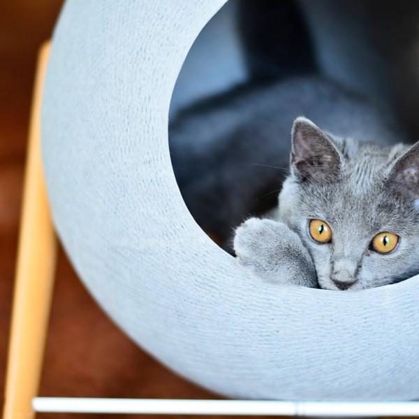 id e cadeau le sac chat ou le chat c main jamais sans maurice. Black Bedroom Furniture Sets. Home Design Ideas
