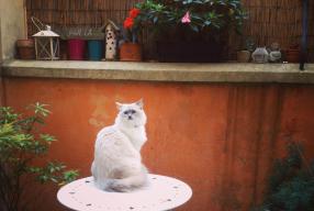 Un nouveau parc pour chats à Milan