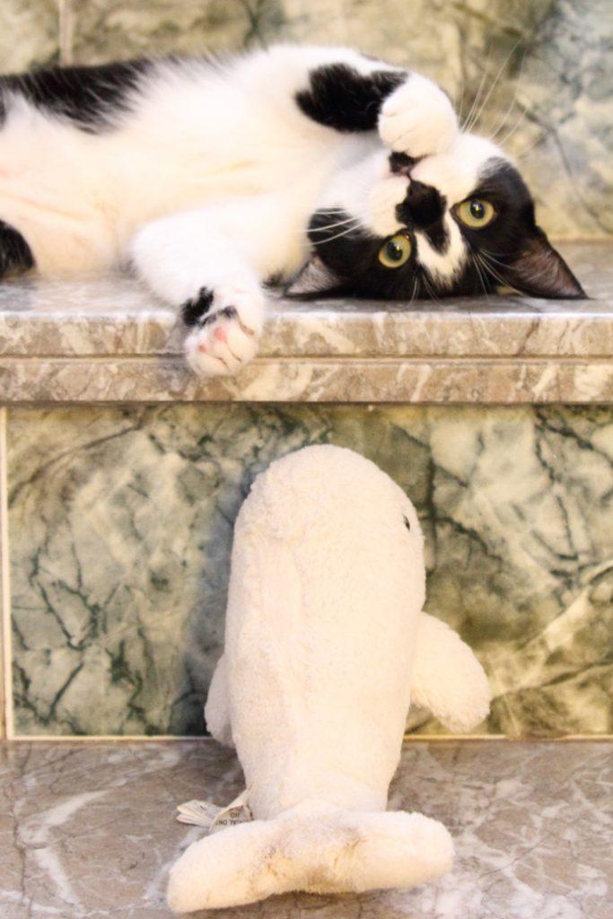 voyage-petfriendly-chien-chat-2