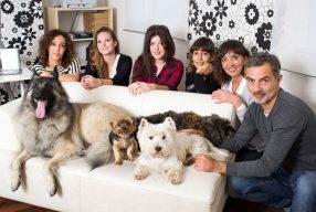 City Pattes : un magazine urbain pour chiens et chats