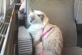 Conseils pour voyager en train avec son animal