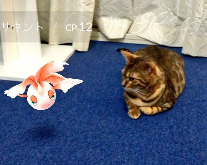 Au Japon les animaux pourraient voir les Pokémon…