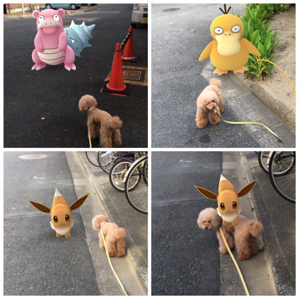 animaux-pokemon-go-5