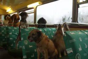 Londres propose un bus touristique réservé aux chiens