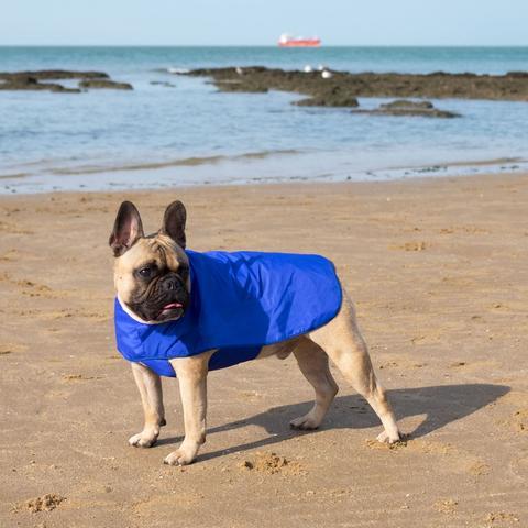 manteau-pour-chien-bouledogue
