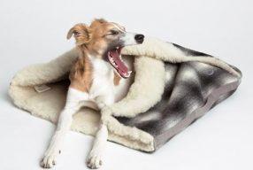 Protéger son chien du froid en hiver