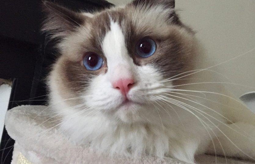 6 idées insolites de panier pour chat