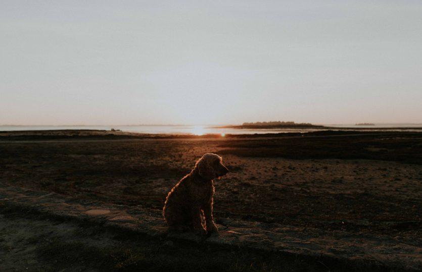 Partir avec son chien dans le Golfe du Morbihan – Hôtel Chevalier Gambette