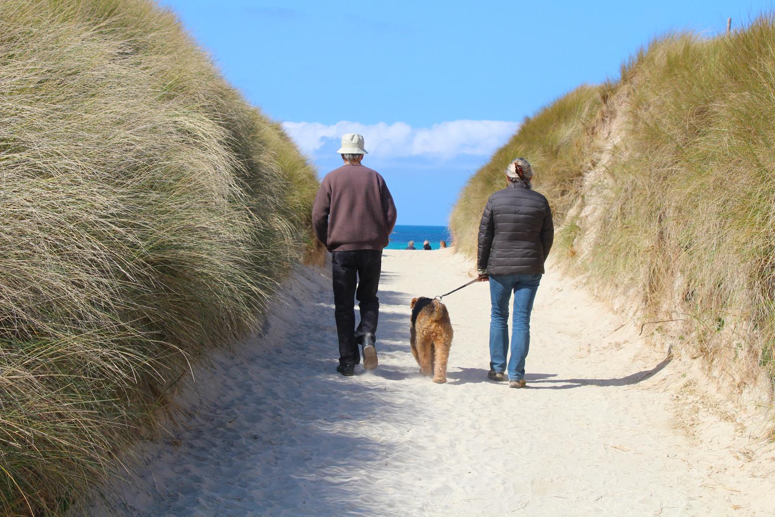 se balader avec votre chien en bretagne sur la plage et. Black Bedroom Furniture Sets. Home Design Ideas