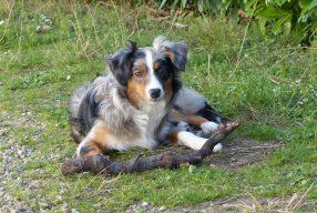 Suivre une formation Premiers Secours Animalier