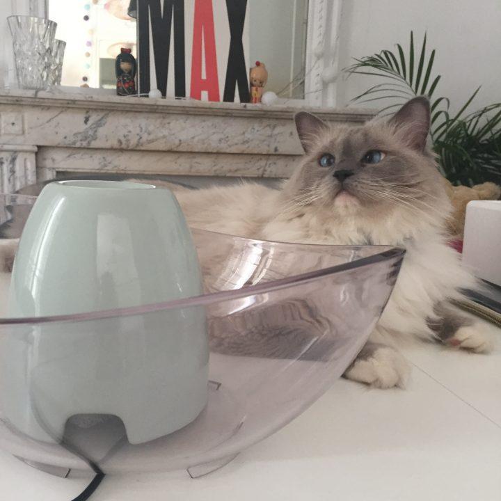 fontaine à eau pour chat ou chiien - conseil adopter et utilisation