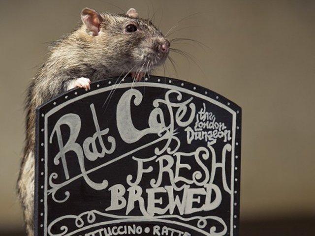 bar-a-rats-londres