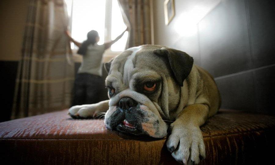 hotel chien paris spa