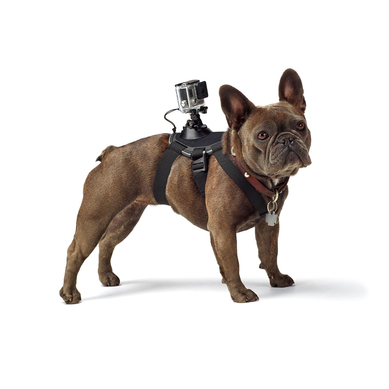 gopro innove avec le tout premier harnais pour chiens jamais sans maurice. Black Bedroom Furniture Sets. Home Design Ideas
