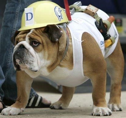 déguisement-chien