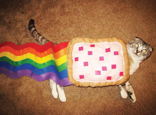 deguisements-halloween-pour-animaux-nyan-cat