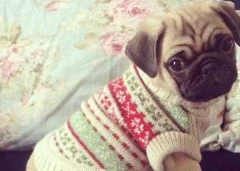 idee-cadeaux-chiens_chats-11