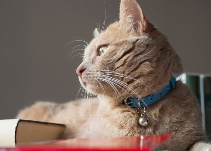 joli collier chat