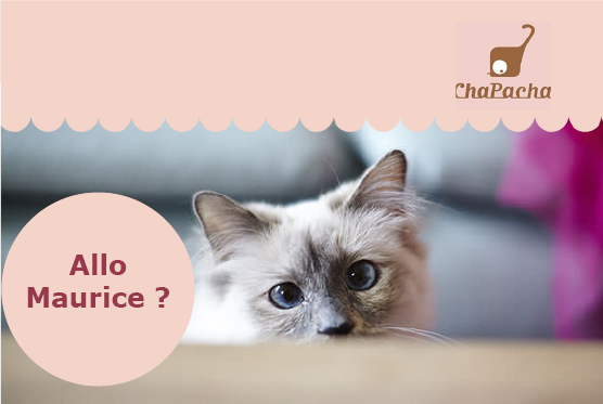 Question chat comportement bizarre chapacha
