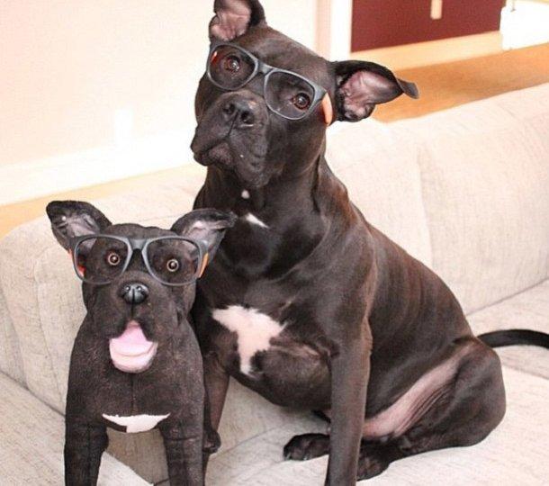 chien-sosie-lunette-peluche
