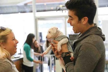 Dog-Cafe-los-angeles-LA