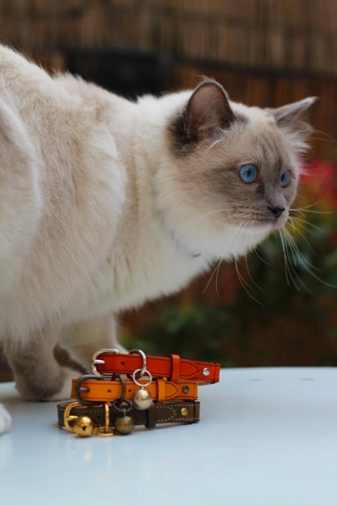 mauricette pose pour les colliers pour chats leautaud jamais sans maurice. Black Bedroom Furniture Sets. Home Design Ideas