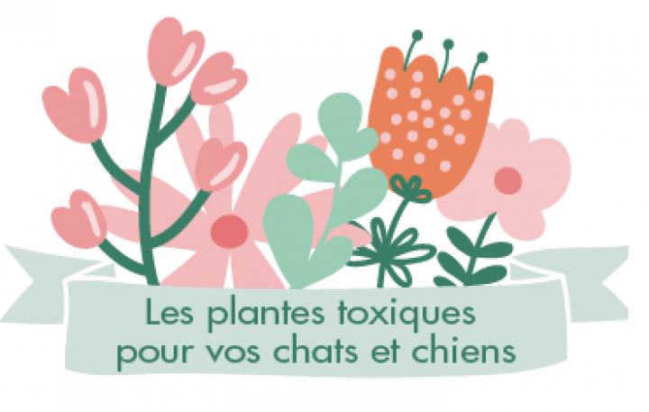 plantes toxiques et dangereuses pour animal chien chat jardin intérieur