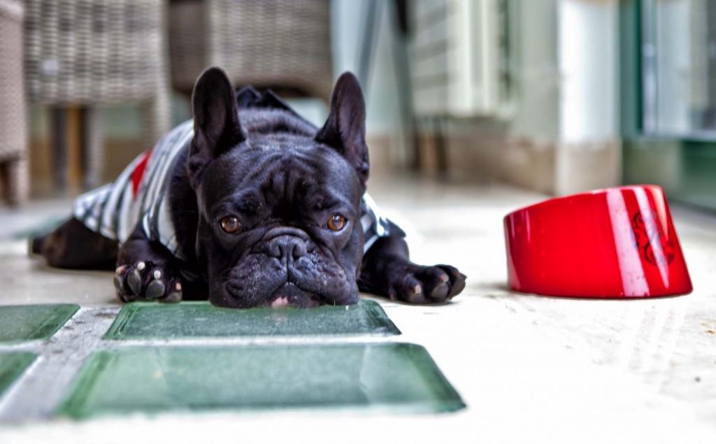 isabelle-courtenay-lifestyle-chien