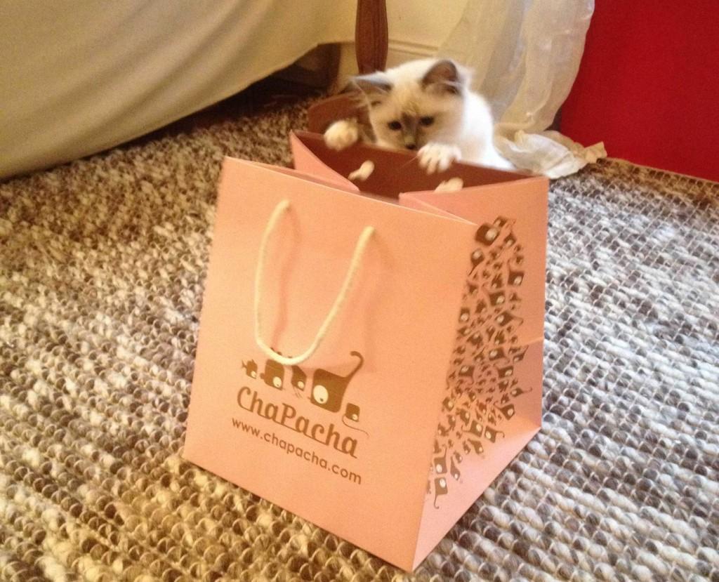 chapacha-catsitter