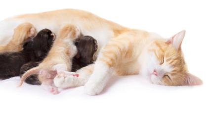 chaton-mère-chat-portée