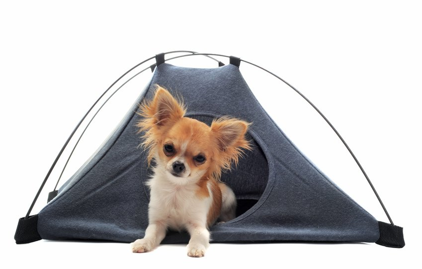 camping-acceptant-animaux-chien