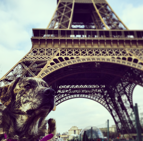 voyager-chien-paris