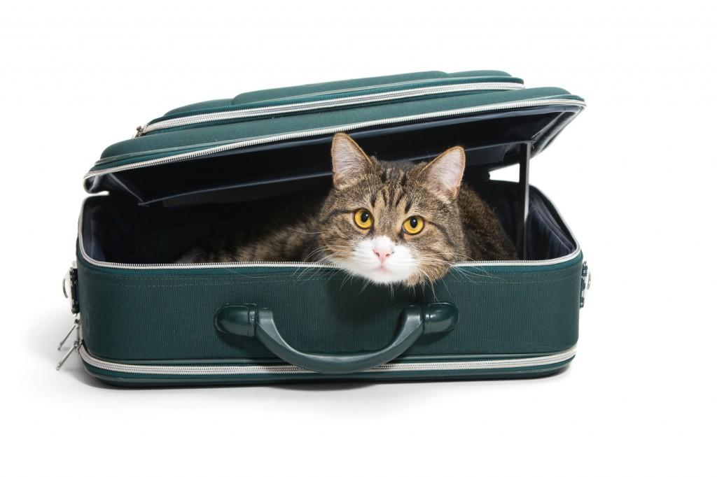 partir en vacances et voyager quand on a un chat
