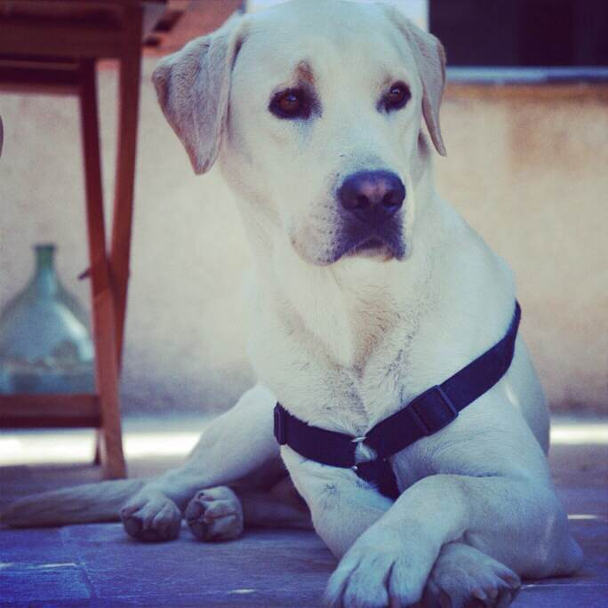 louer une voiture de location avec son chien jamais sans maurice. Black Bedroom Furniture Sets. Home Design Ideas