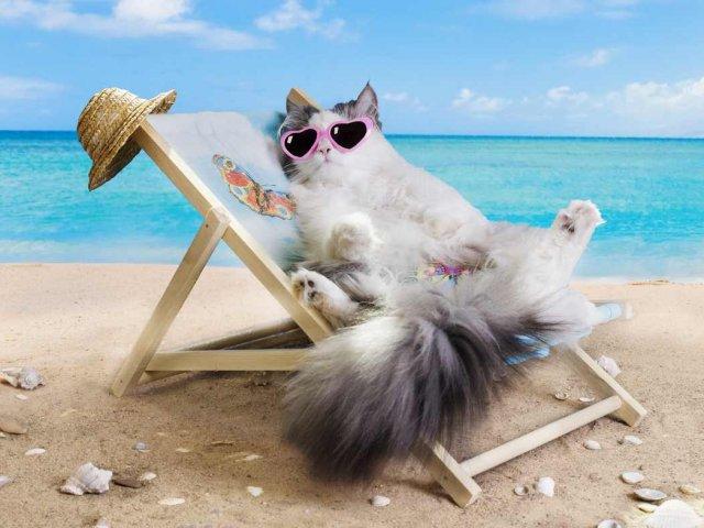 chat-vacances-partir-voyage
