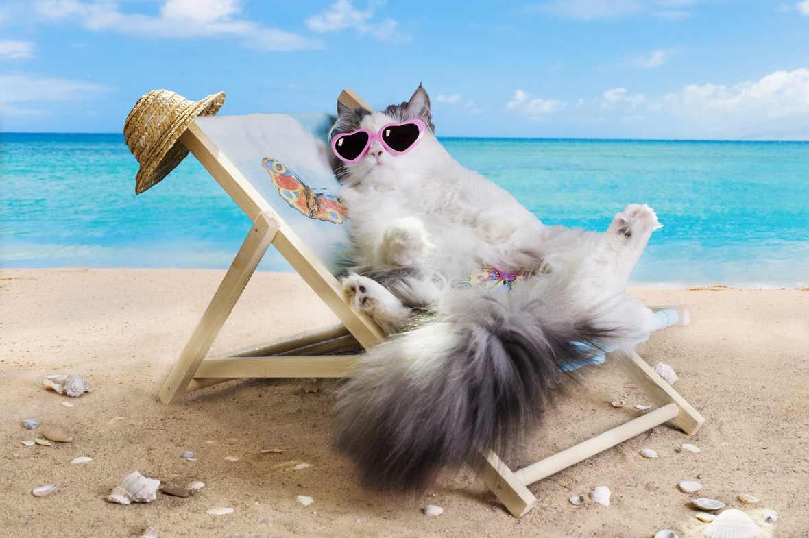 Partir en vacances et faire des rencontres