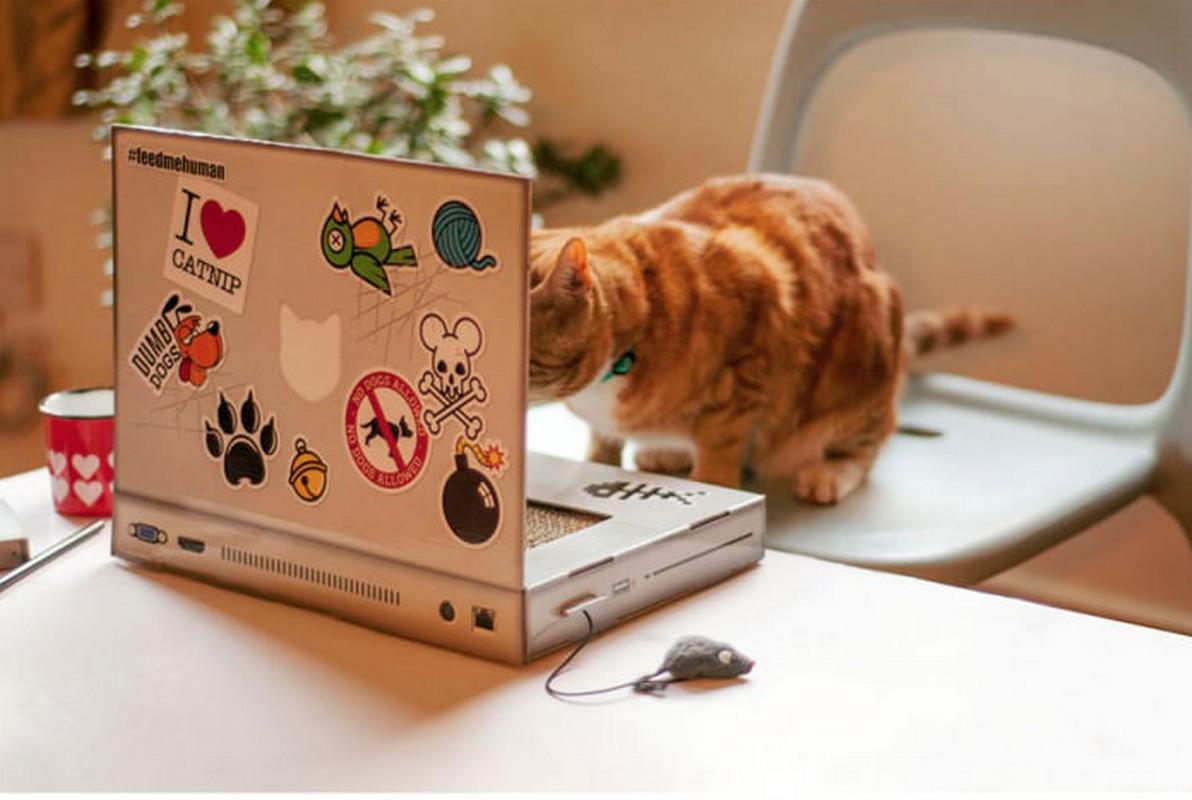 un ordinateur pour chat le cadeau id al jamais sans maurice. Black Bedroom Furniture Sets. Home Design Ideas