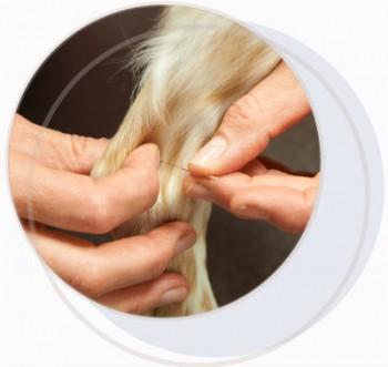 Acupuncture-osteopathie-chien-animaux