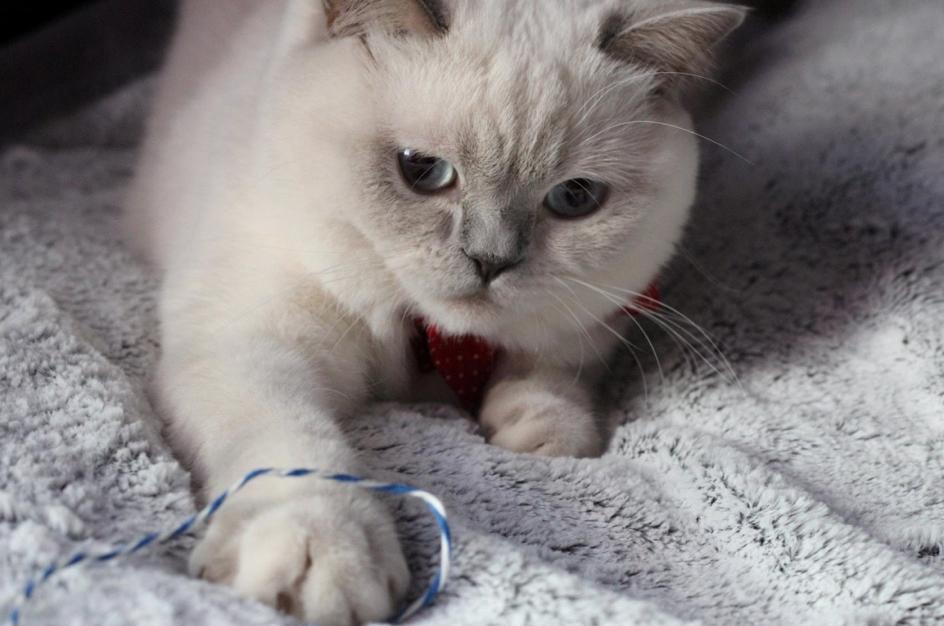 cat-in-berlin-mode-chat-4